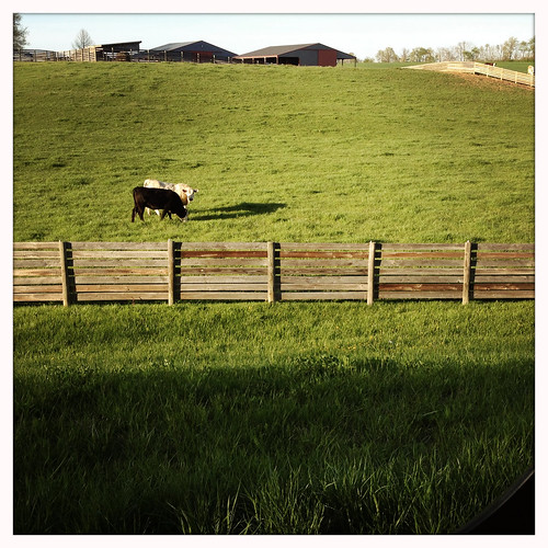 illinois cows floraville hipstamatic