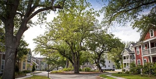 Oak Terrace Preserve, N. Charleston, SC (by: Chrys Rynearson, creative commons)