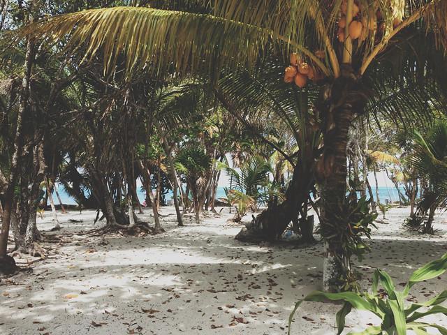 Tulum_Coconuts