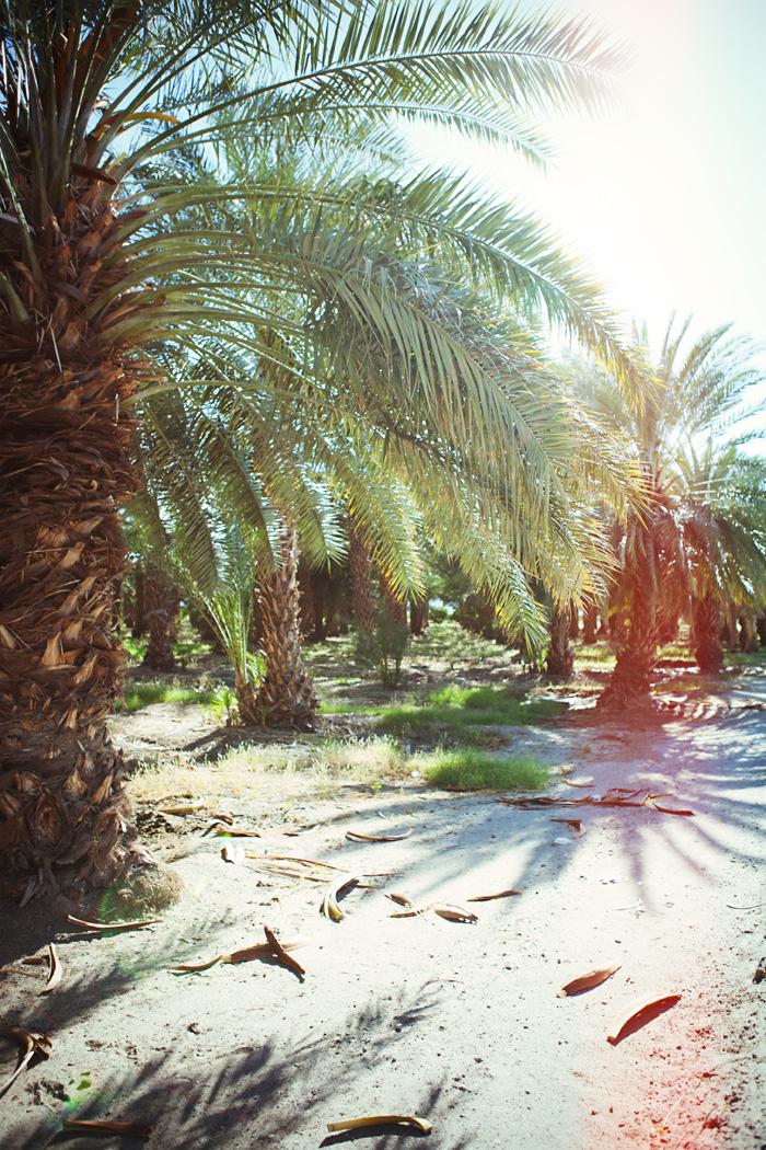 palmfarm