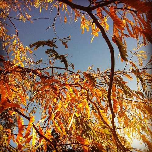 Gorgeous #Autumn leaves on our walk this afternoon #latergram