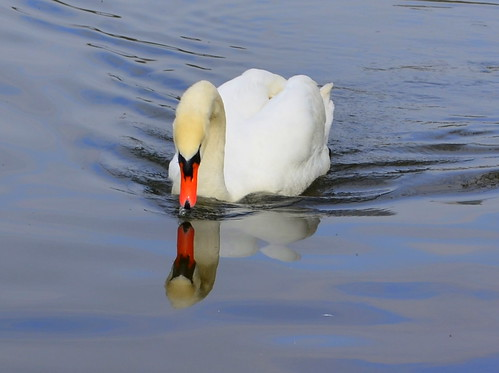 Swan Song 3