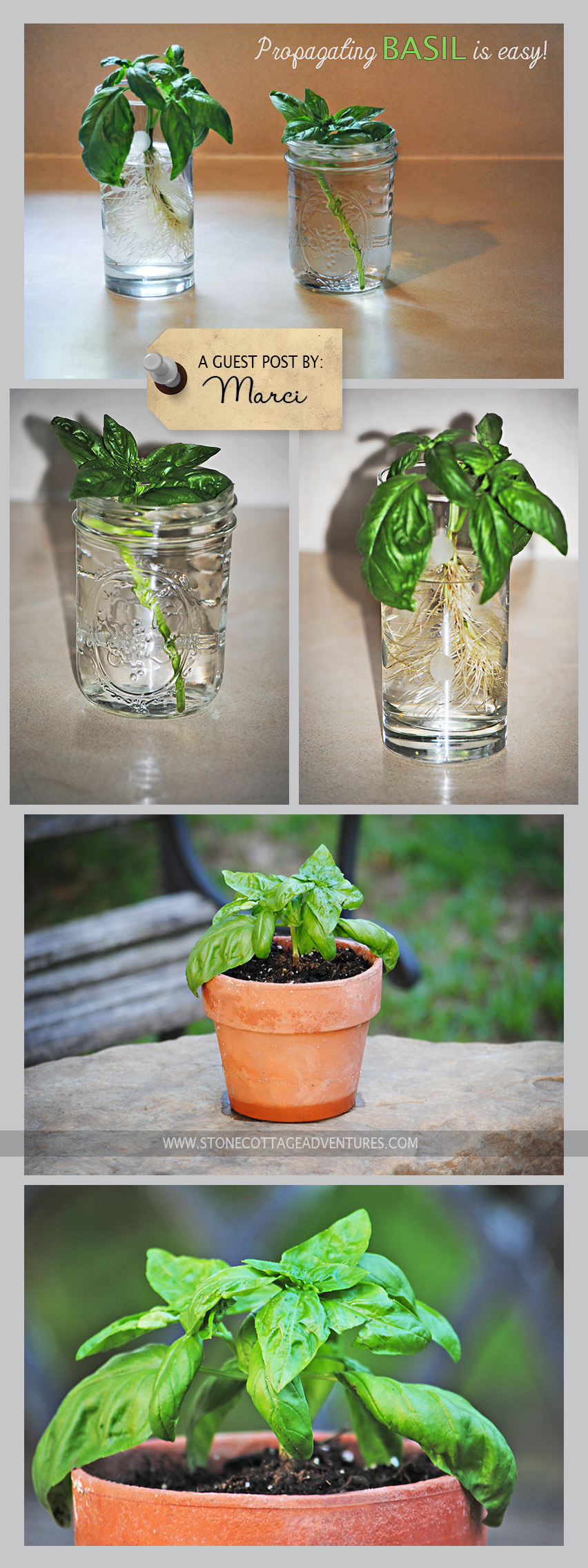 propagating basil guest post