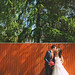 wedding037