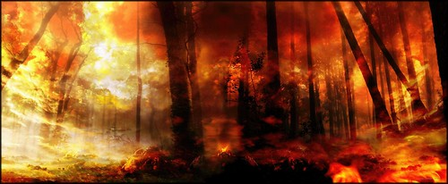 The Forest Fire