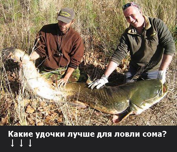 Какие удочки лучше для ловли сома?, Canon DIGITAL IXUS 55