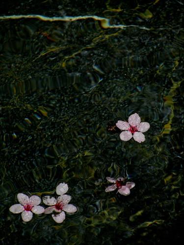 Jardín japonés 4 by JoseAngelGarciaLanda