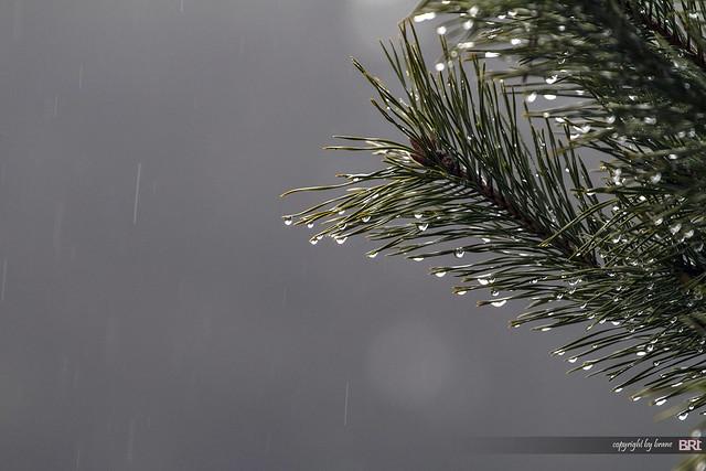 april_rain_01