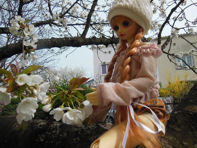 [Toulouse] Résine et fleurs de cerisier 8628548235_9afee4eaae_z