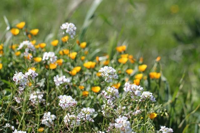 march rains bring april flowers
