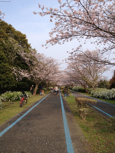 spring in uminonakamichi