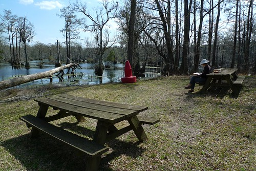 Fav Lunch Spot - Merchants Millpond State Park - near Gatesville, NC