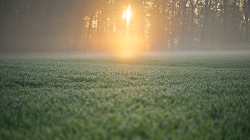 morning sun fog sunrise canon day nebel bokeh swiss foggy wiese 85mm tau f18 sonne morgen