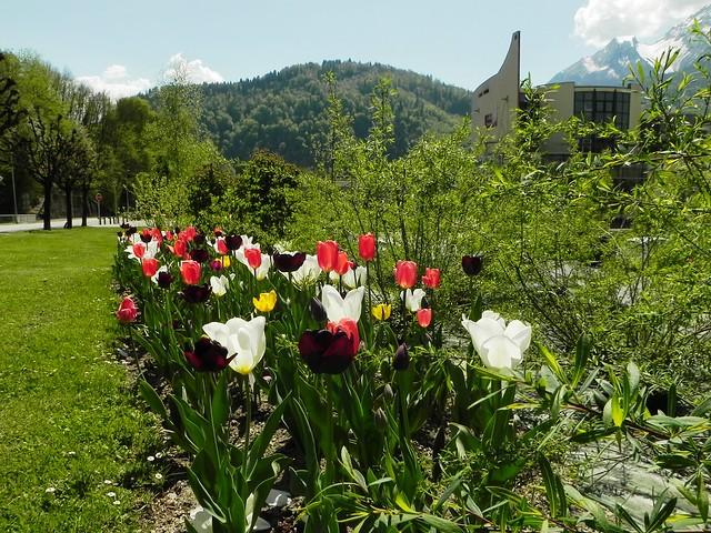 Parterres de tulipes à Ugine.