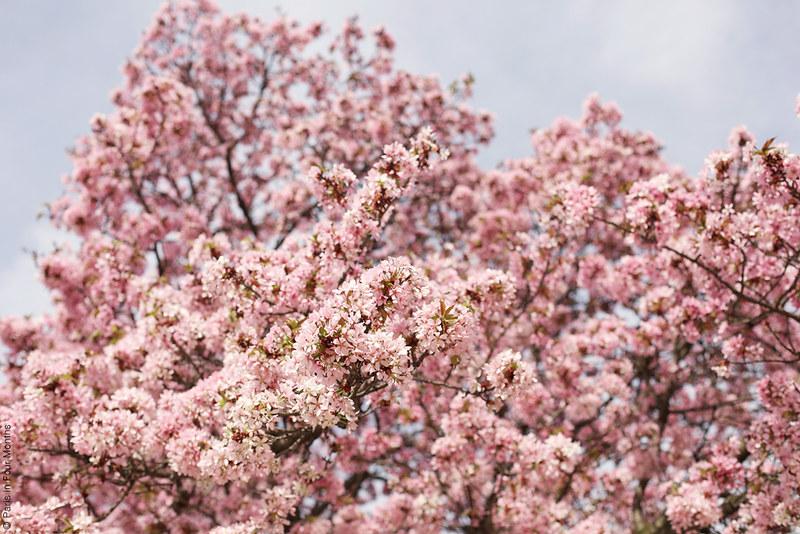 Jardin des Plantes During Springtime