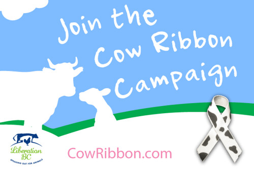 cow ribbon