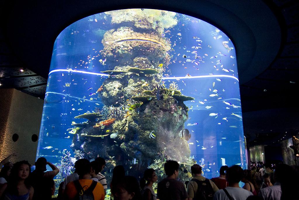 The Largest Aquarium In The World S E A Aquarium The