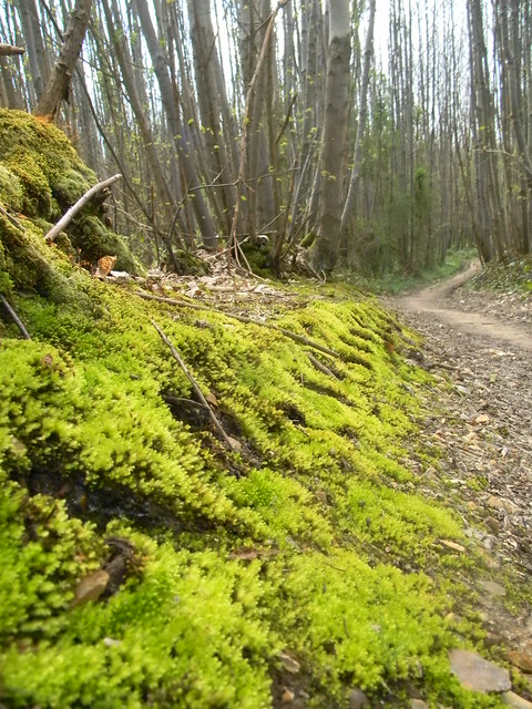 Mossy bank with path ahead