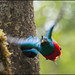 Resplendent Quetzal by Chris Jimenez Nature Photo