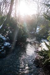 Winter 2013 (Jesmond Dene)  (17)
