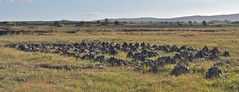 wetland(0.0), ranch(0.0), wildebeest(0.0), herd(0.0), grazing(0.0), safari(0.0), marsh(0.0), prairie(1.0), steppe(1.0), ecoregion(1.0), plain(1.0), natural environment(1.0), meadow(1.0), wilderness(1.0), pasture(1.0), savanna(1.0), grassland(1.0), wildlife(1.0),