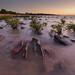 Mini Mindil Mangroves by Louise Denton