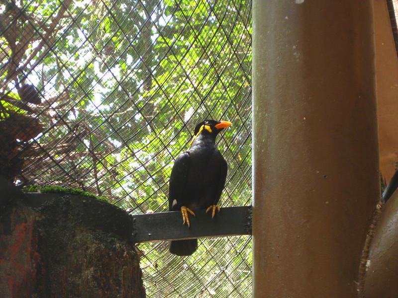 Taiping Zoo IMG_5954