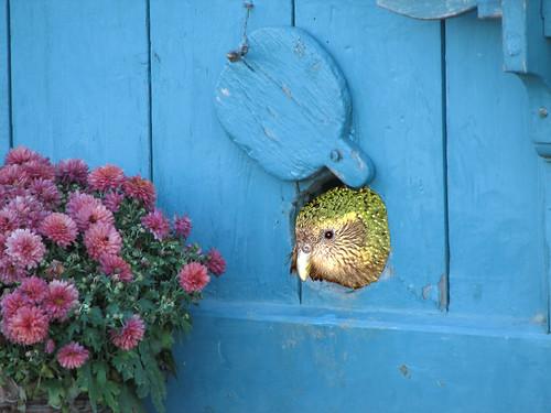 Gareth Morgan To Clone Kakapo As Cat Alternative City