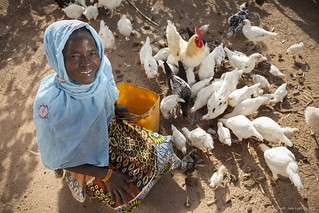 Growing Businesses: Farmer in Burkina Faso feeds her chickens