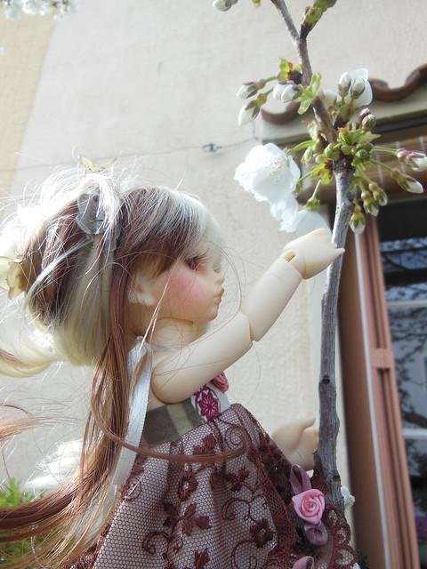 [Toulouse] Résine et fleurs de cerisier 8628516949_b5fa6929df_z