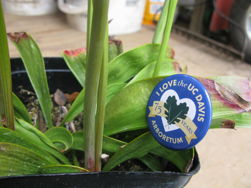 Davis Plants 1177