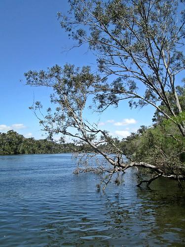 Blackwood River, Western Australia - Near Alexander Bridge