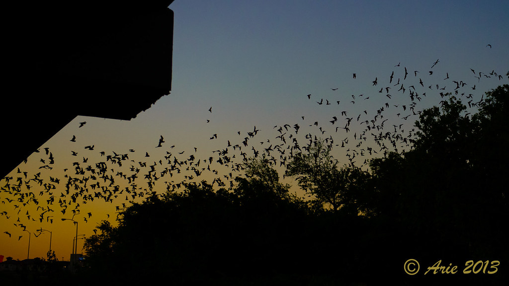 Waugh Street Bridge Bat Colony