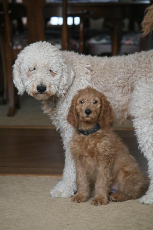 Adam Levine's Puppy!