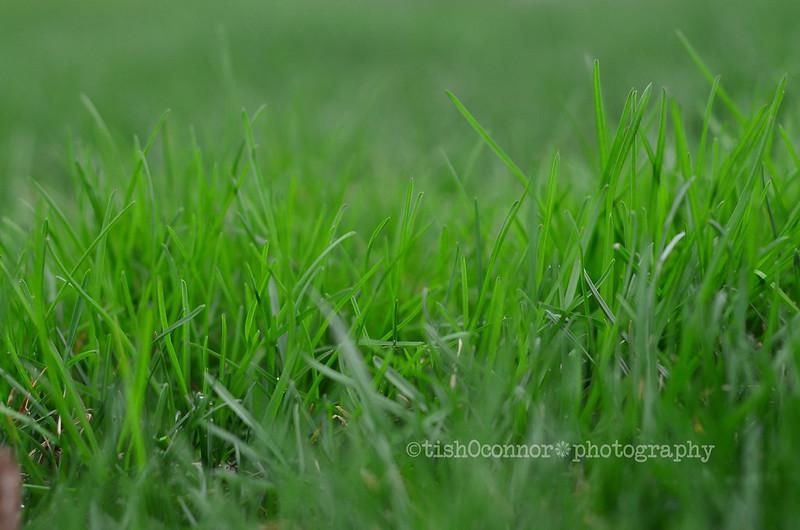 green grassDSC_5330