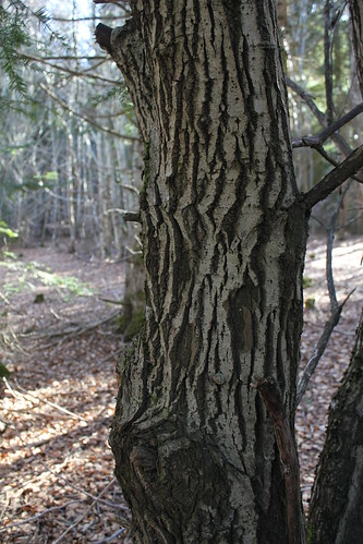 Hêtraie sapinière des Monts Breysse- 43 (8)