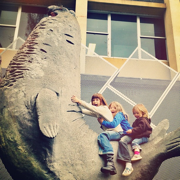 My children are riding a Southern Elephant Seal. Your argument is invalid. || #elephantseal #biggest