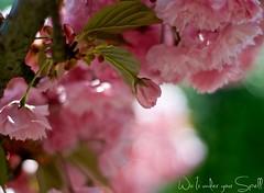 Flowers Montessuy 3
