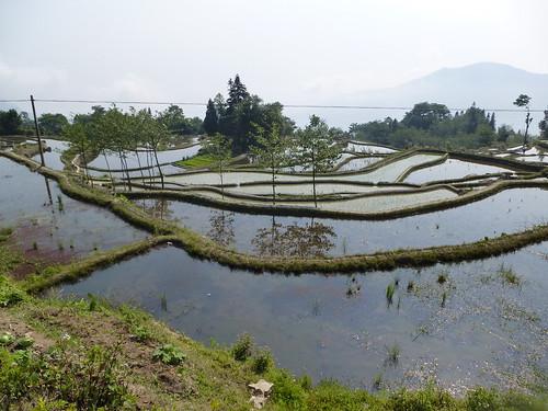 Yunnan13-Yuanyang 6 (3)