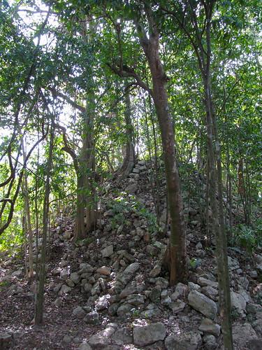 El paso del tiempo (Pirámide bajo el bosque)