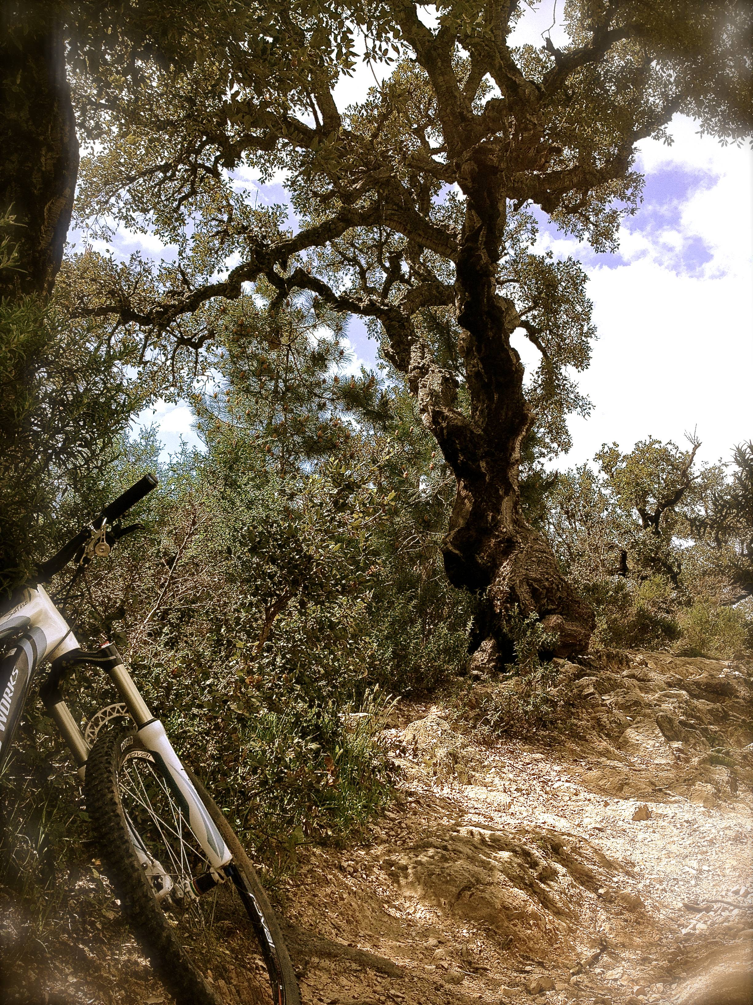 Samedi 20 avril. Au-dessus de Roquebrune.