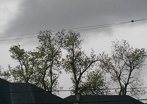 IMAG0254-1