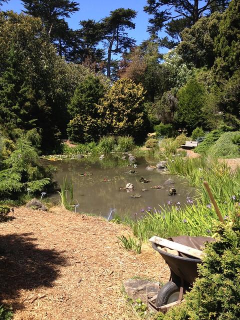 San Francisco Botanical Garden Golden Gate Park Explore K Flickr Photo Sharing