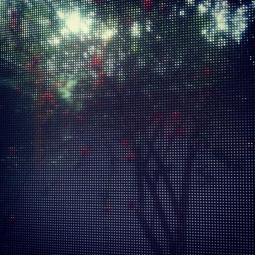 Pomegranate tree, rainy courtyard, screen window.