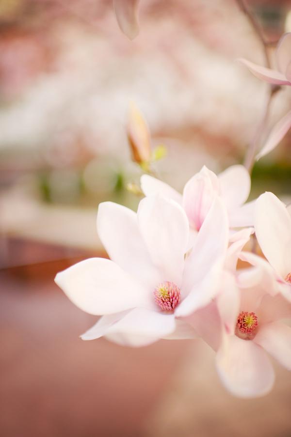 RYALE_Spring-20