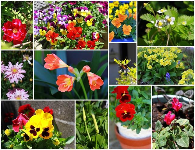 flowers from mom's garden