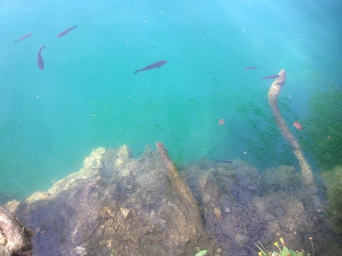 Fish at Plitvice Lakes
