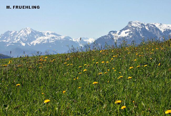 explosion du printemps sur le piémont autrichien sous le soleil et la chaleur record du 28 avril 2012 météopassion