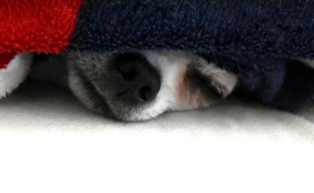Sleep tight.
