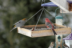 bluebird(0.0), animal(1.0), branch(1.0), wing(1.0), fauna(1.0), bird feeder(1.0), bird(1.0),
